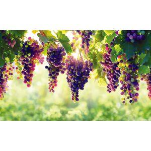Дубай виноградник купить как купить квартиру в оаэ цены